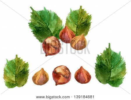 Watercolor set of hazelnuts isolated on white background. Hand painted illustration