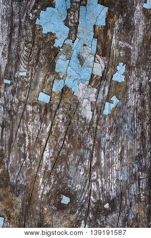 Worn Old gray wood texture with paint residues