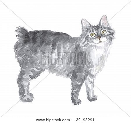 The Kuril bobtail. Image of a thoroughbred cat. Watercolor painting.