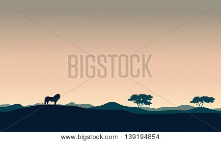 Beautiful landscape lion silhouettes at the afternoon