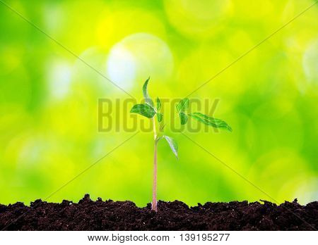 Little green plant on green background