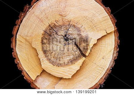 Close-up of a cross section of a tree stump showing aging circles on black background