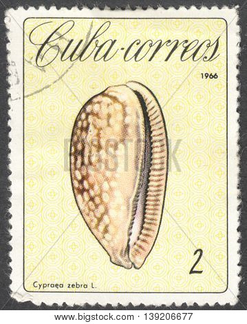 MOSCOW RUSSIA - CIRCA JANUARY 2016: a post stamp printed in CUBA shows Cypraea zebra shell the series