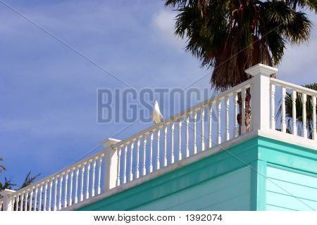 Roof Of Tropical Building With Seagull