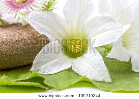 several boulders and granadilla flower in close up on an white background