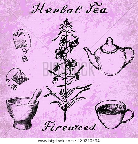 Willow herb, Chamerion, fireweed hand drawn sketch botanical illustration. Vector drawing. Lettering. Grunge background. Herbal tea elements - cup, kettle, tea bag, bag, mortar and pestle