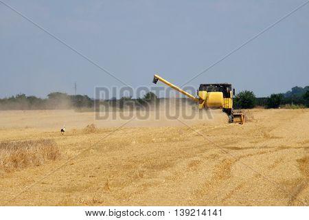 NEDELISCE, CROATIA - JULY 02, 2016: Combine harvester harvest ripe wheat on a farm in Nedelisce, Croatia on July 02, 2016