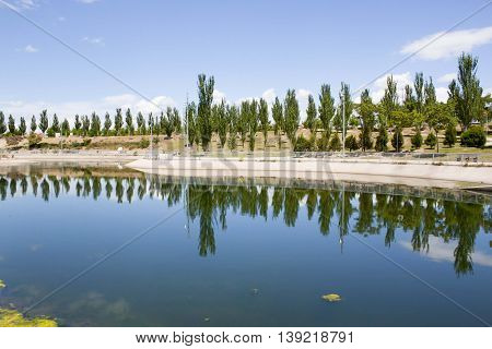 Black poplars in a park reflecting in a lake in summer