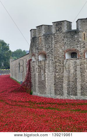TOWER of LONDON UK 16 September 2014 : Remembrance poppies