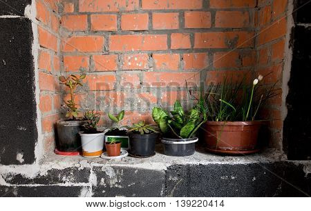 Green decorative plant near cement wall, rustic home interior decor with copy space.
