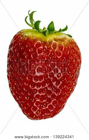 Single big red strawberry on isolated white.