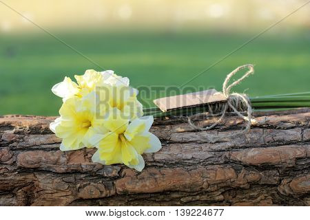 small bouquet of daffodils on a horizontal tree trunk