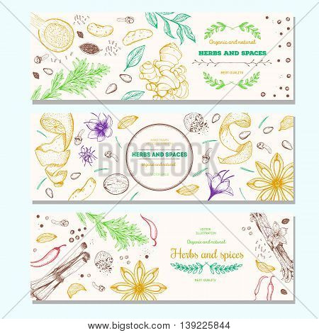 Herbs and spices vintage design template. Horizontal banners set. Vector illustration hand drawn linear art.