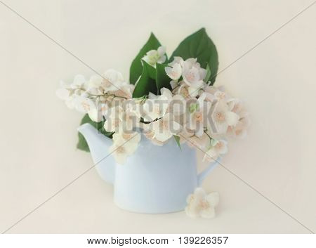Fresh jasmine flowers in watering can on white background