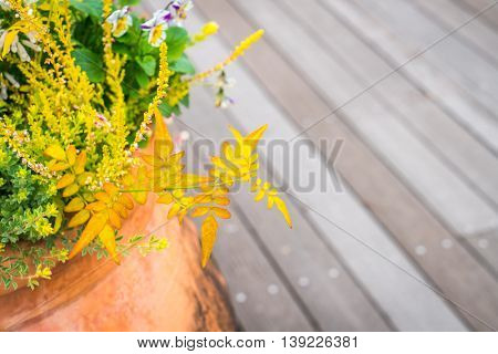 Outdoor plant in a traditional wooden floor