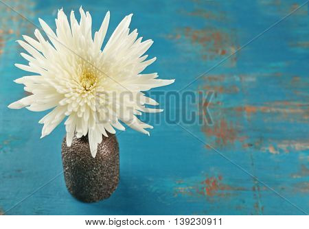 White chrysanthemum on wooden table