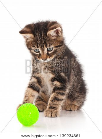Cute little kitten with thread ball isolated on white background