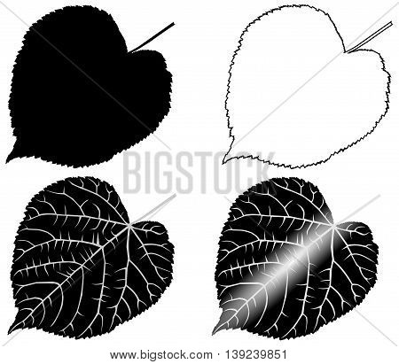 linden , lime , teil , lime-leaf , isolated linden leaf