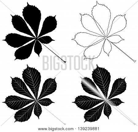 chestnut buckeye ,  isolated buckeye leaf , buckeye leaf   illustration