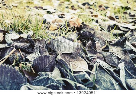 Fallen Autumnal Leaves Lay On Grass