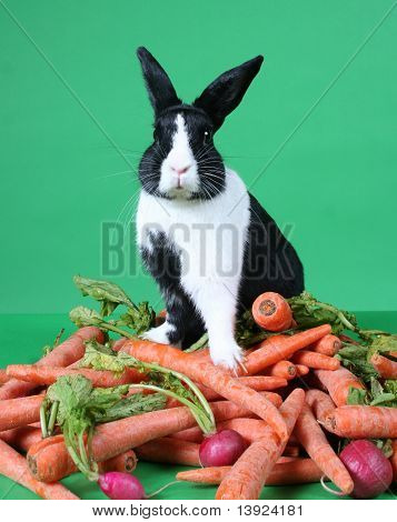 Bunny Rabbit On Pile Of Vegetables