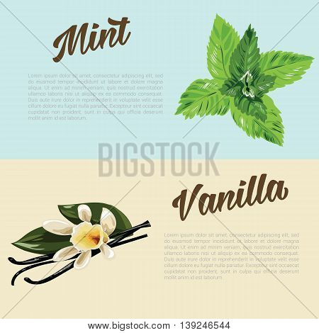 herbs and spices with hand painted food objects: mint and vanilla. Kitchen herbs and spices banner