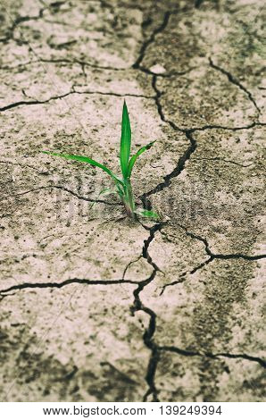 green plant growing between dry cracked soil
