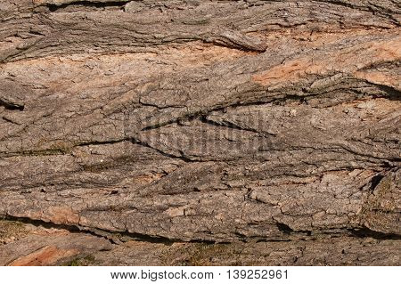 Bark Tree texture. Background of bark tree.
