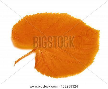 Autumnal Linden-tree Leaf