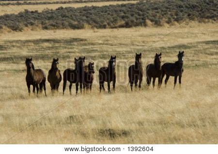 Wild Horses Standing In The Grass
