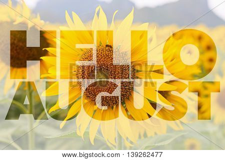 Hello AUGUST word on sun flower background