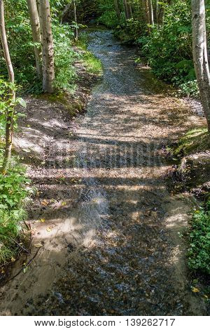 A stream flows along at Saltwater State Park in Washington State.