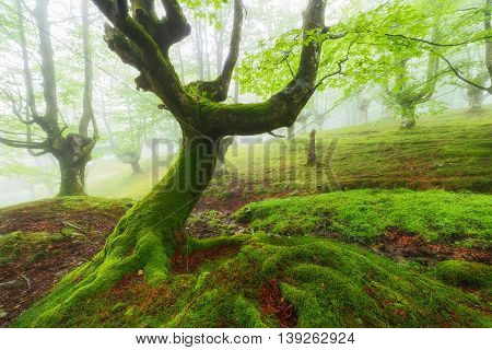 Green forest, fairy tale at Gorbea Natural Park