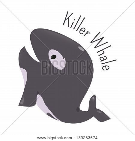 Killer whale isolated. Orca. Orcinus. Large toothed animal. Oceanic dolphin family. Types transients, residents, offshore. Part of series of cartoon northern animal species. Child fun icon. Vector