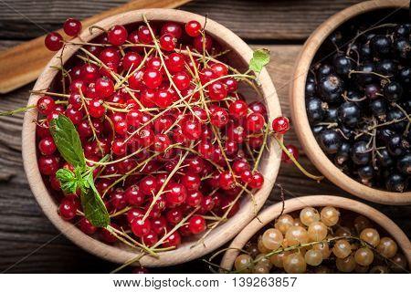Redcurrant, Blackcurrant, White Currant Fruit.