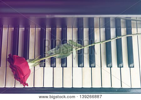 Piano keys and red rose closeup
