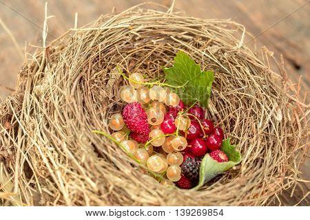 Wild Berries In Straw Nest