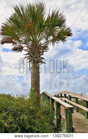 A beach access through Palm trees at Edisto Beach, South Carolina.