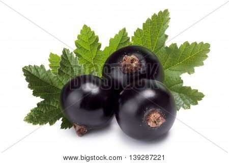 Three Blackcurrants With Leaves