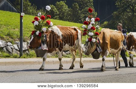 Charmey Fribourg Switzerland - 26 September 2015 : Farmers with a herd of cows on the annual transhumance at Charmey near Gruyeres Fribourg zone on the Swiss alps
