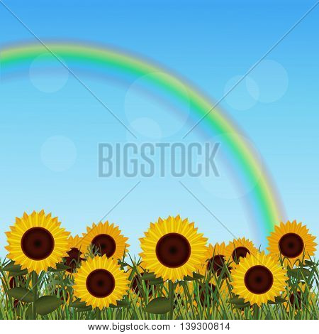 lawn with sunflower and rainbow on a blue background