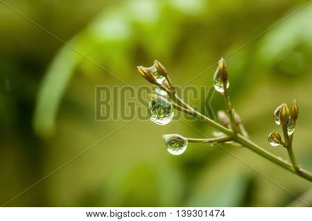 Raindrops with reflection with shallow dof background