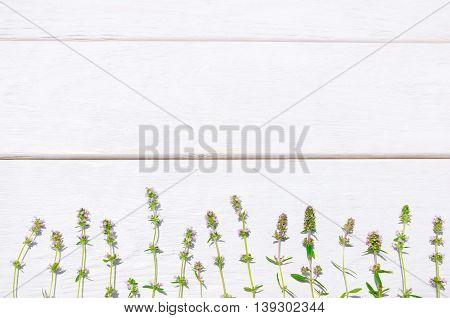 Fresh summer herbs on white wooden background. Horizontal line of field flowers on colored planks. Copyspace for text or advertisement