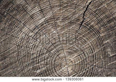 Wooden Cut Background