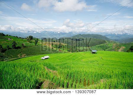 Blue Sky And Green Terraced Rice Field In Pa Bong Piang Chiangmai, Thailand