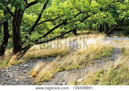 Deciduous forest in summer. Seasonal natural scene. Dry grass and green trees. Beauty in nature. Hiking theme.