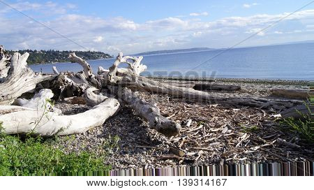 beach with driftwood at West Point Lighthouse