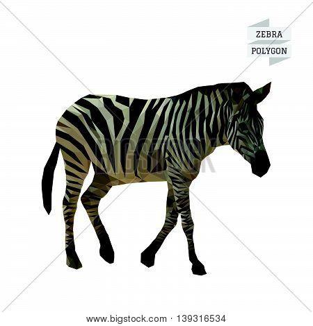 Zebra polygon vector on white color background