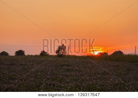 Summer evening background of nature : bright sunset in the countryside, meadow with blooming clover, in the distance is a forest.
