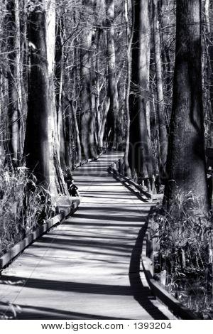 Walk Way Through Cyprus Swamp